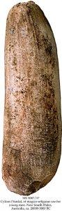 Cylcon (Yurda) 3 | MS 5087/17