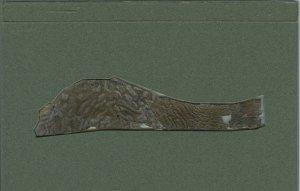 Pentateuch Dead Sea Scroll   MS 5439/1