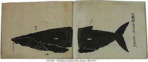 KAJITORIZAKI KUJIRATORI ZU | MS 2469